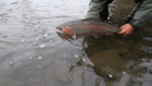 A Steelhead Family - Official HD video 3.1